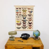 Butterfly Poster Hanger Kit Identification Chart French_D