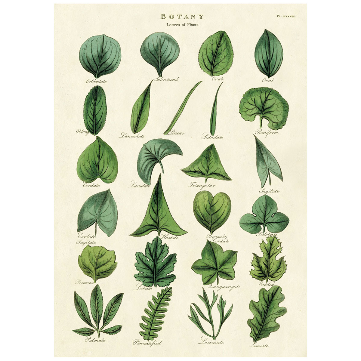 Botany Plant Leaves Vintage Style Poster At Retro Planet