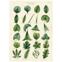 Botany Plant Leaves Vintage Style Poster