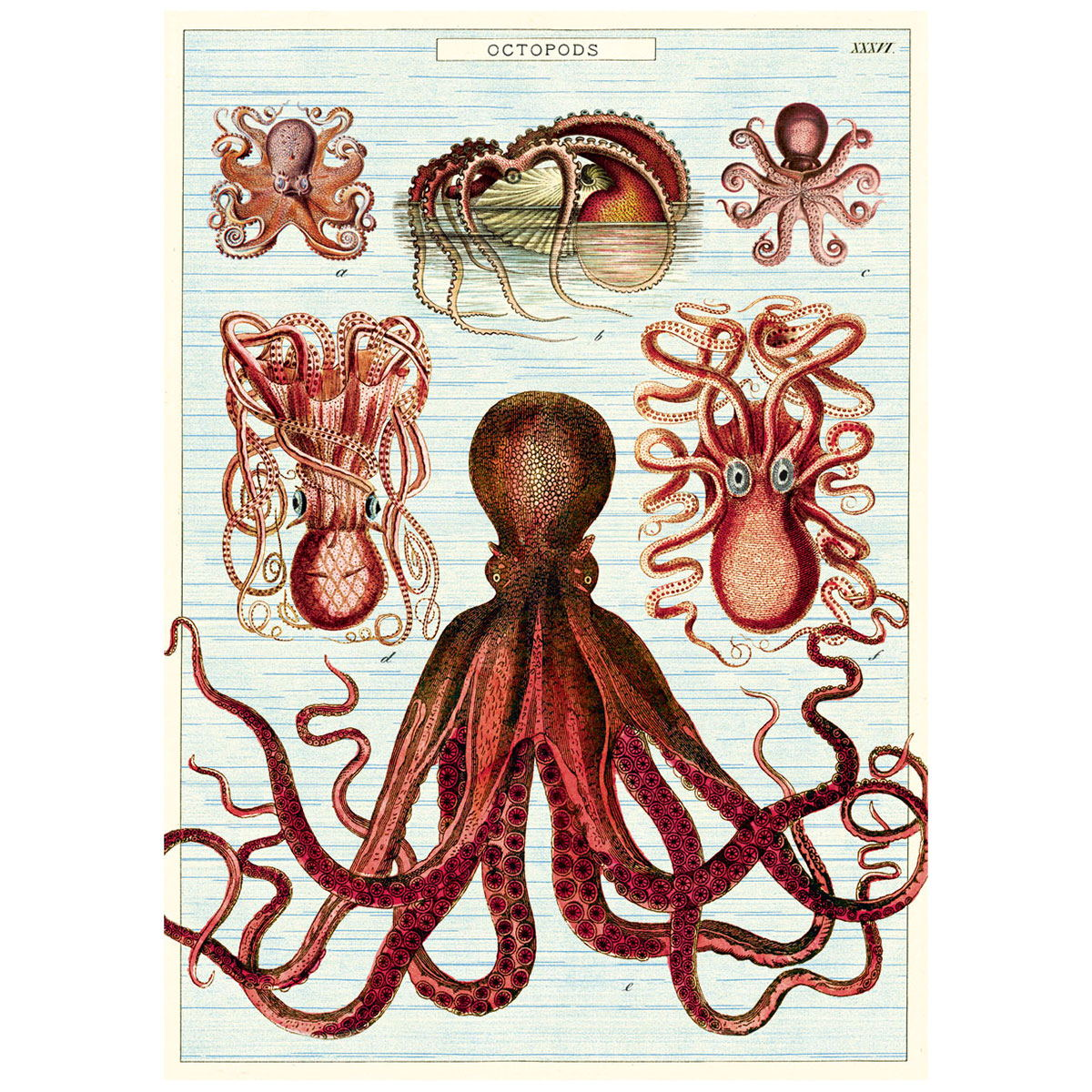 Octopus Octopods Chart Vintage Style Poster | Decorative Paper ...