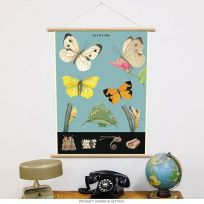Butterfly Life Cycle Vintage Style Poster & Hanger Kit_D