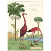 Flamingo Natural History Vintage Style Poster