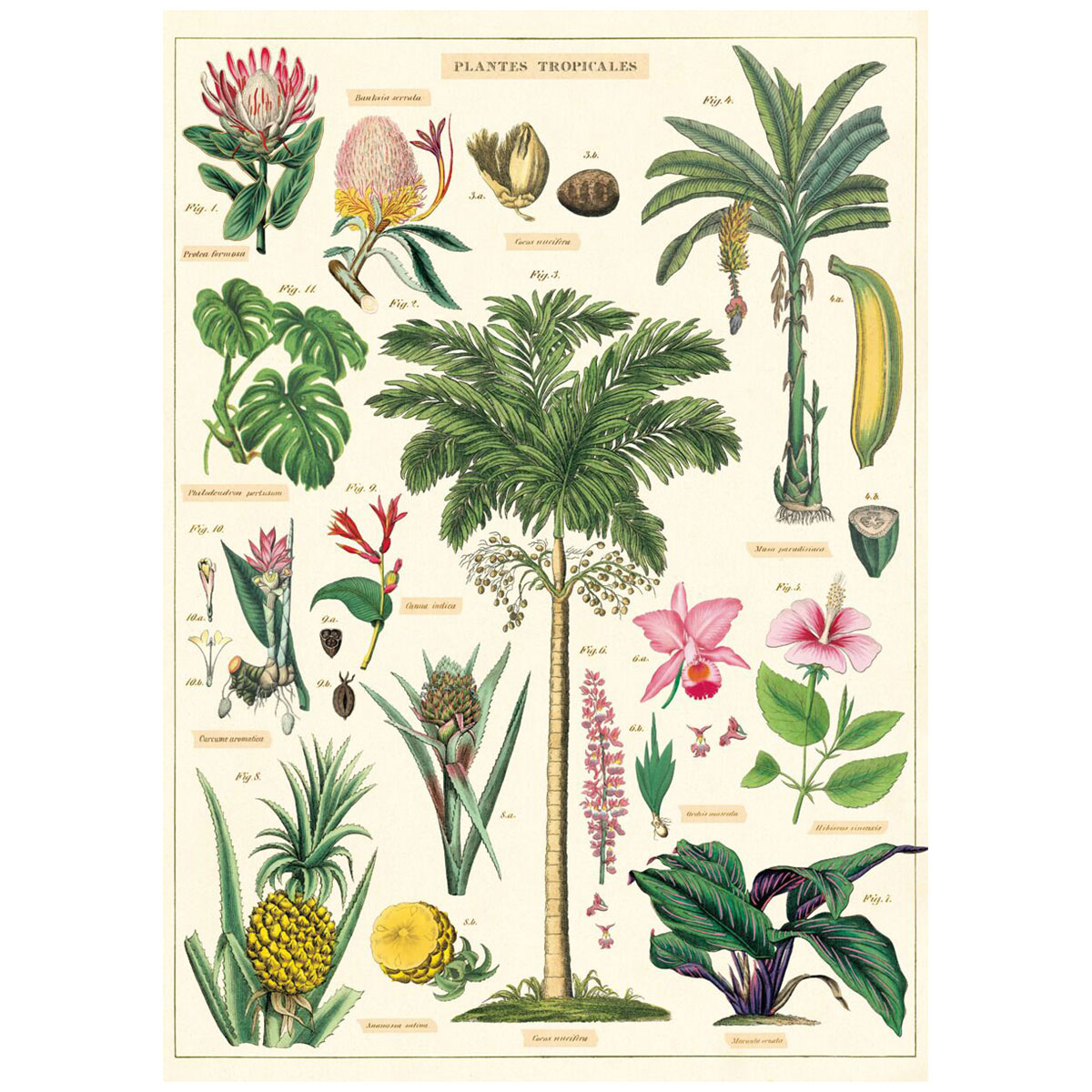 Tropical Plant Species French Chart Vintage Style Poster