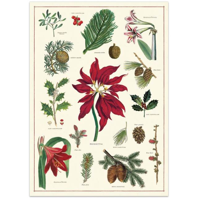 Christmas Plants Botanica Vintage Style Poster At Retro Planet