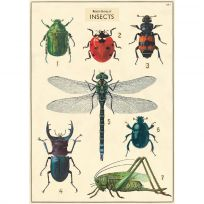 Insects Scientific Chart Vintage Style Poster