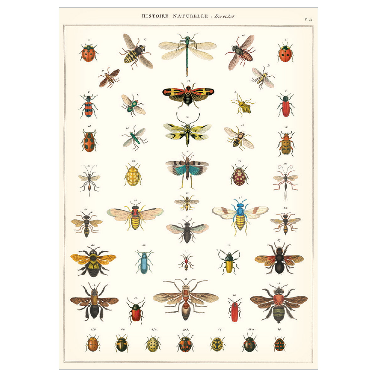 Insect Chart French Natural Science Poster At Retro Planet