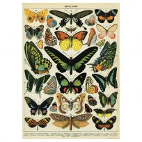 Butterfly Chart French Natural Science Poster