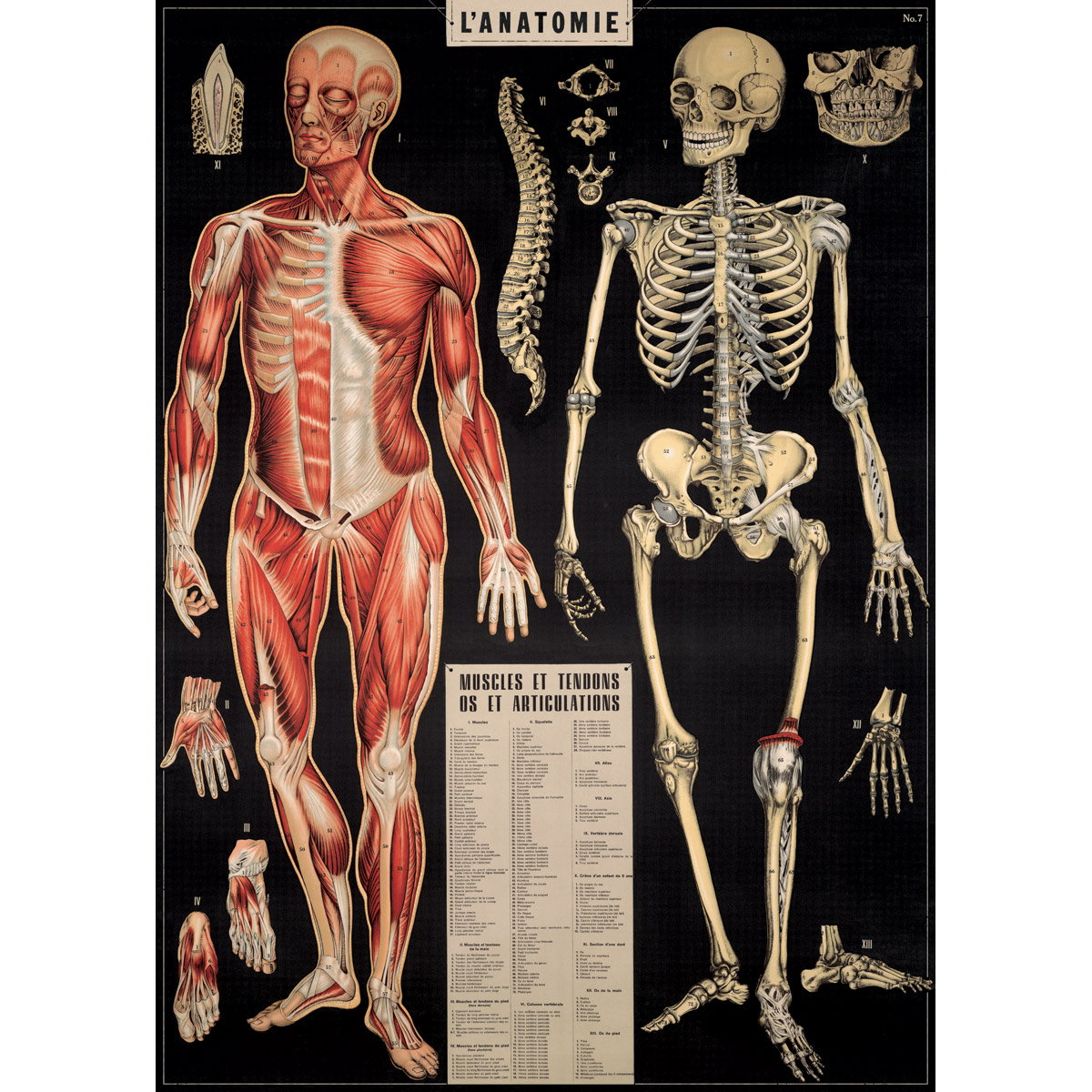 French Human Anatomy Chart Vintage Style Poster At Retro