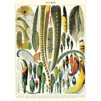 French Feathers Plumes Chart Vintage Style Poster