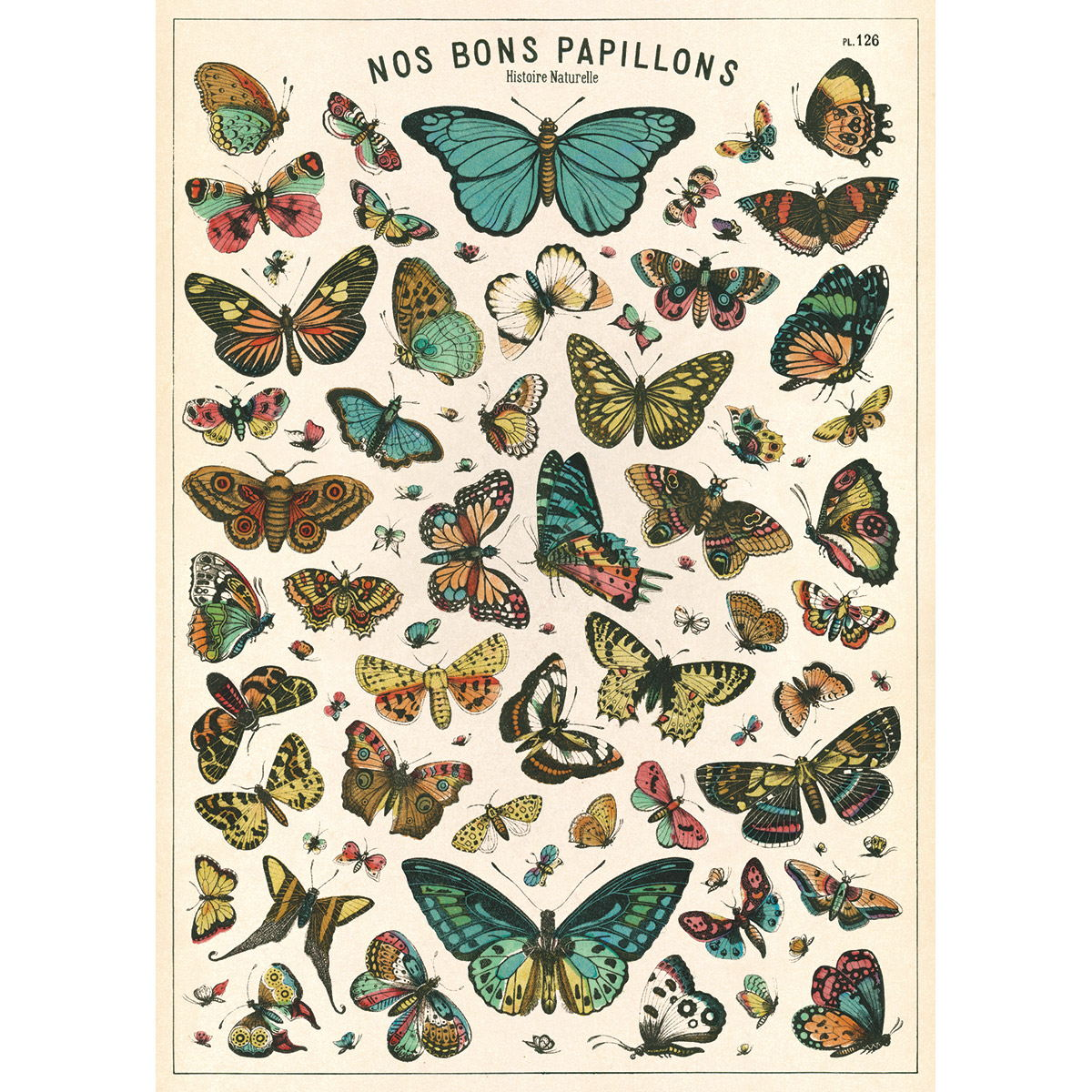 French Butterfly Chart Papillons Vintage Style Poster at ...  Vintage Butterfly Chart