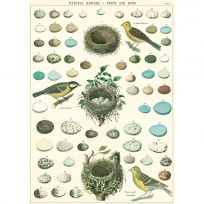 Bird Nests and Eggs Chart Vintage Style Poster