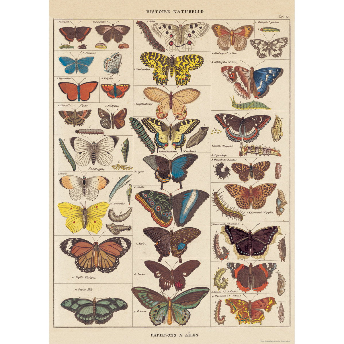 French Butterflies Nature Chart Vintage Style Poster at ...  Vintage Butterfly Chart