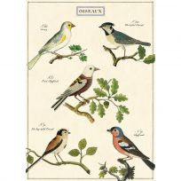 Birds French Vintage Style Bird Watching Poster